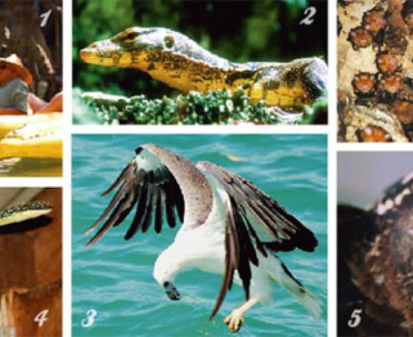 Wildlife in Thailand